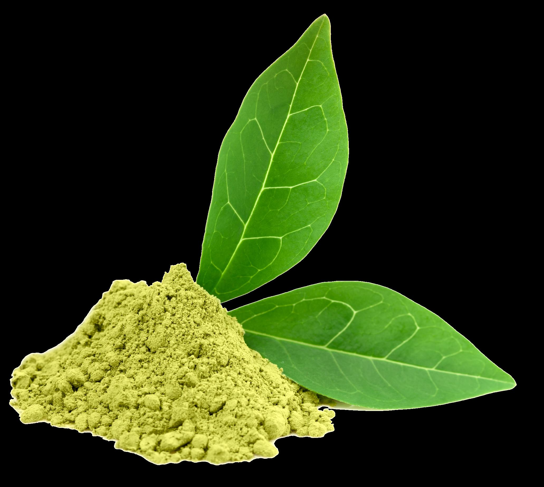 Hq png transparent images. Clipart leaves green tea leaf