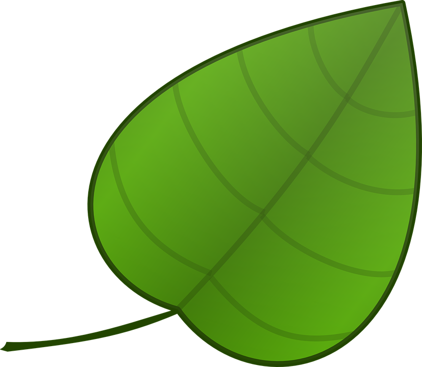 Clipart leaves jack and the beanstalk. Ideas for leaf template