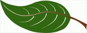 Clipart leaves large leave. Free leaf graphics images