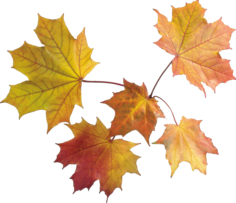Png leaves . Clipart park autumn sky