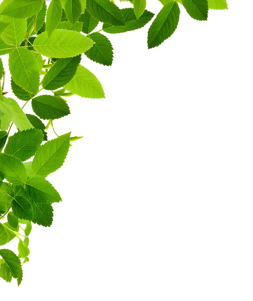 Corner clipart greenery. Free download leaves left