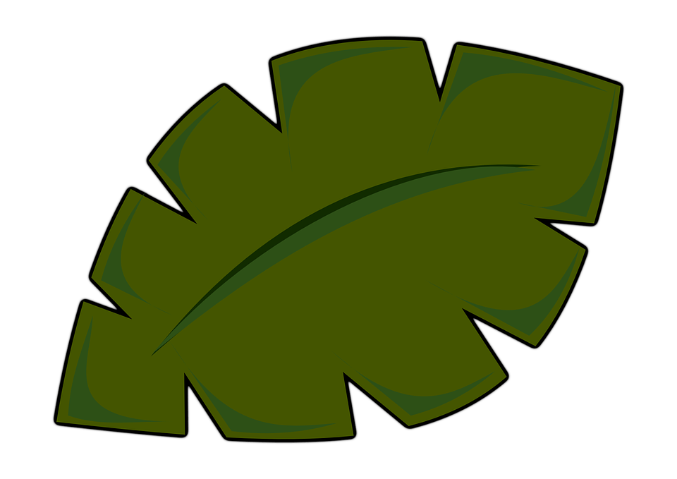Palm clipart royalty free. Leaf great hd backgrounds