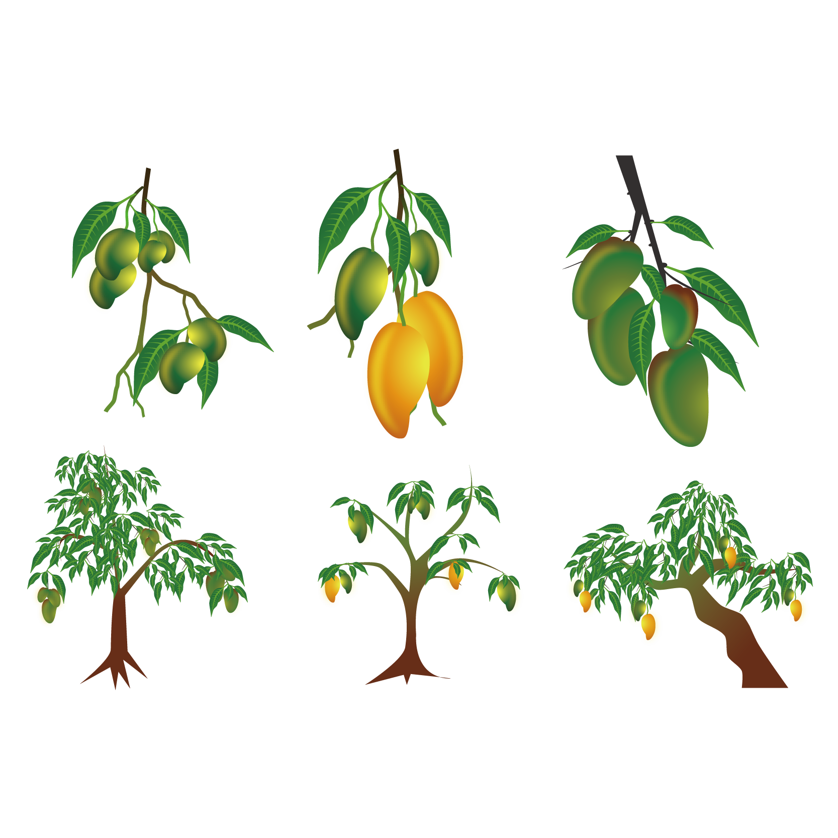 Euclidean vector clip art. Clipart leaves mango tree