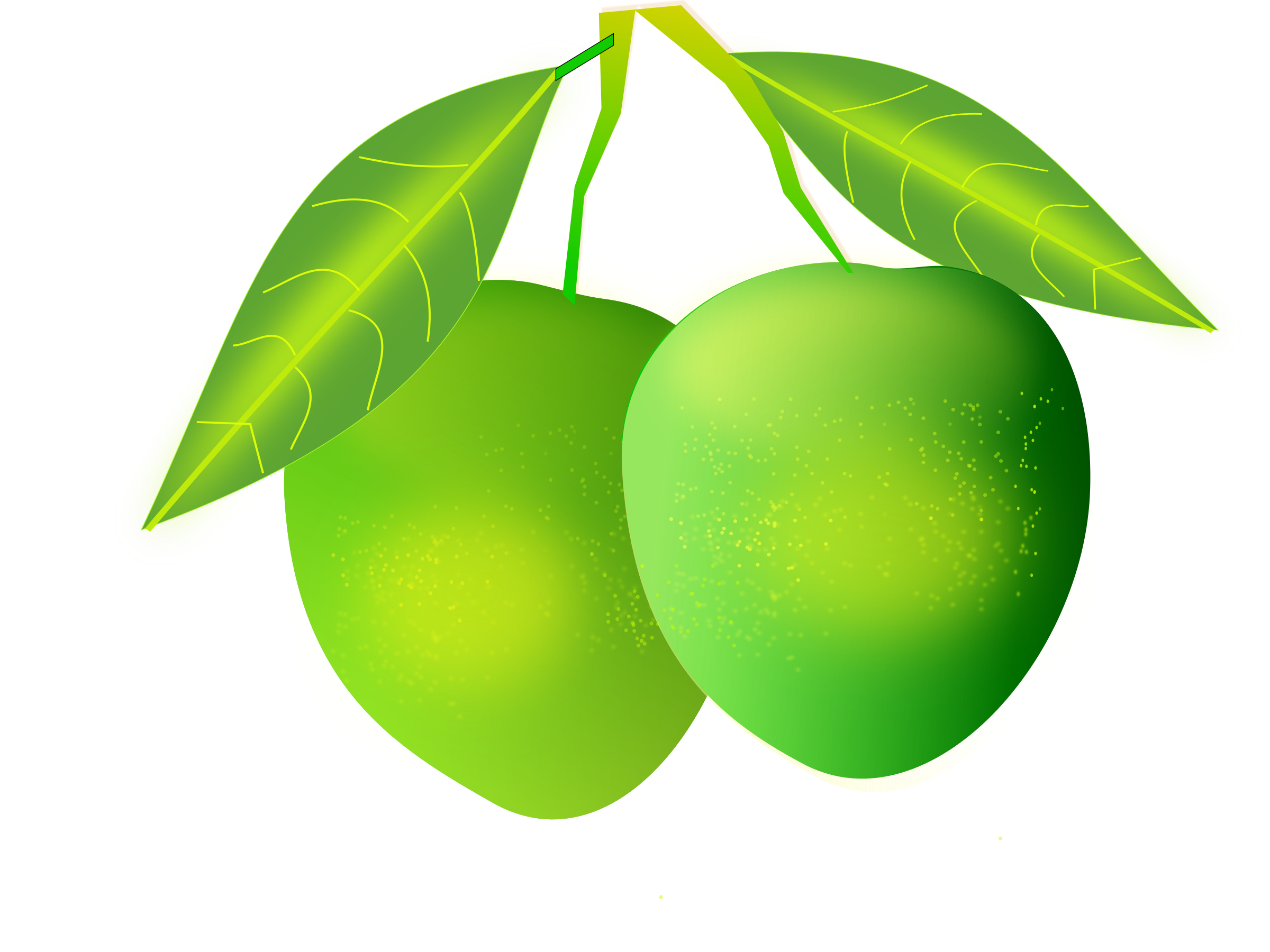 Clipart leaves mango tree. Big image png