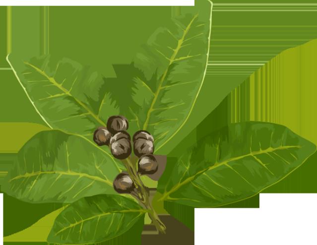 Tea clipart herbal leaf. Graphic design pinterest bay