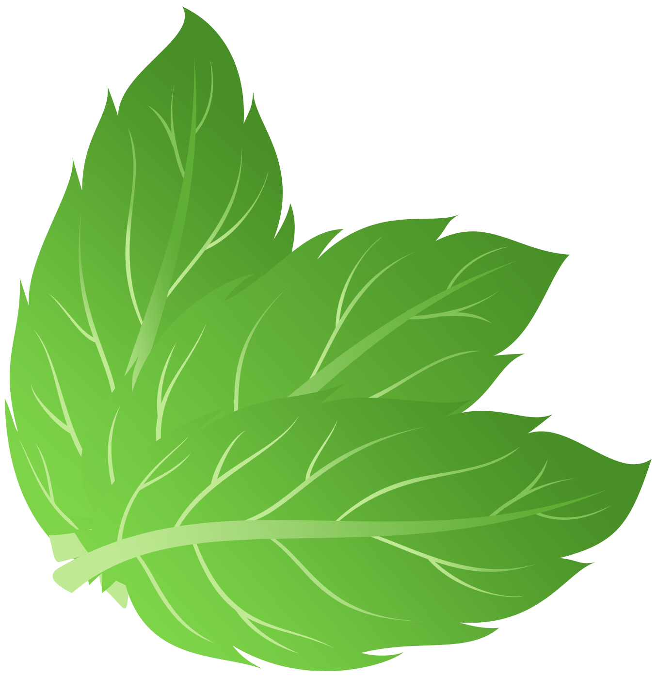 Pepermint images free download. Leaf vector png