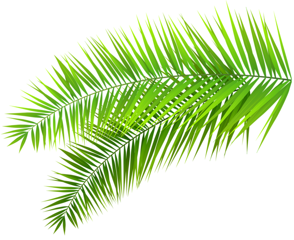 Pin by shwe myint. Clipart leaves palm leaves