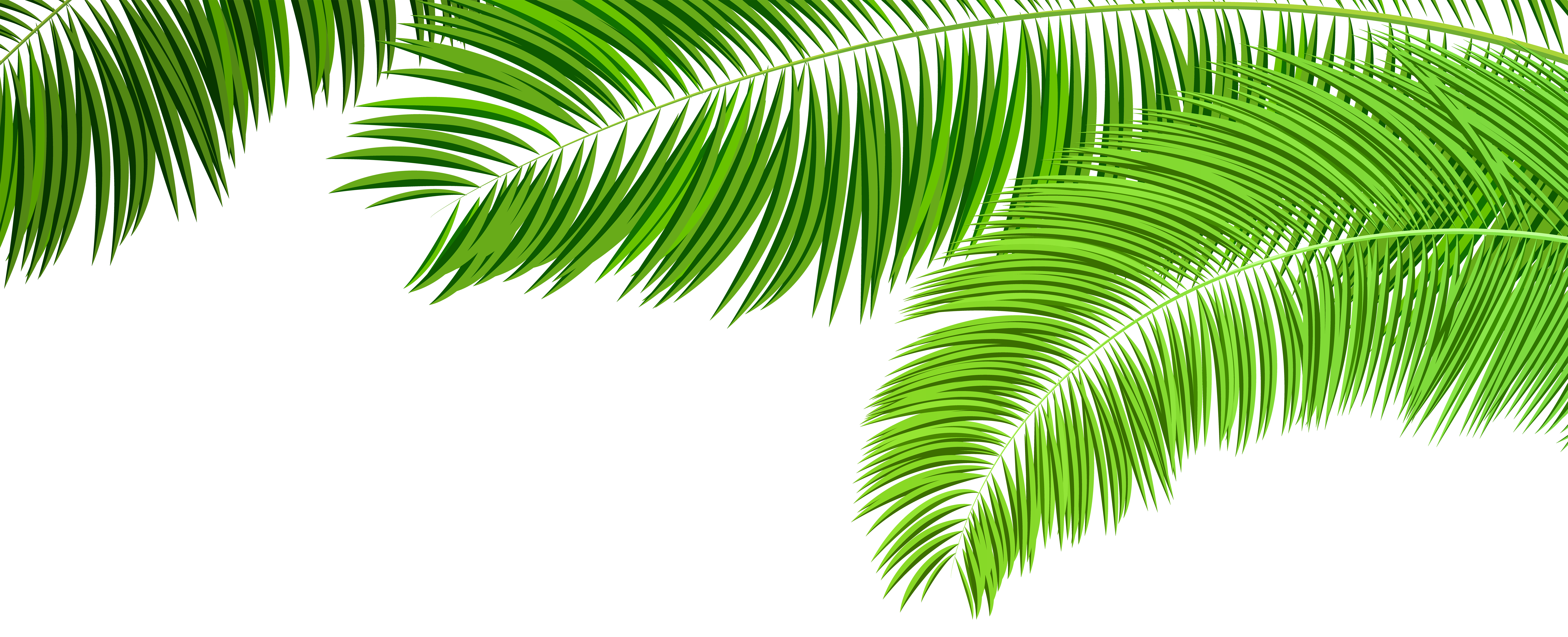 Branches decoration png clip. Palm clipart green branch