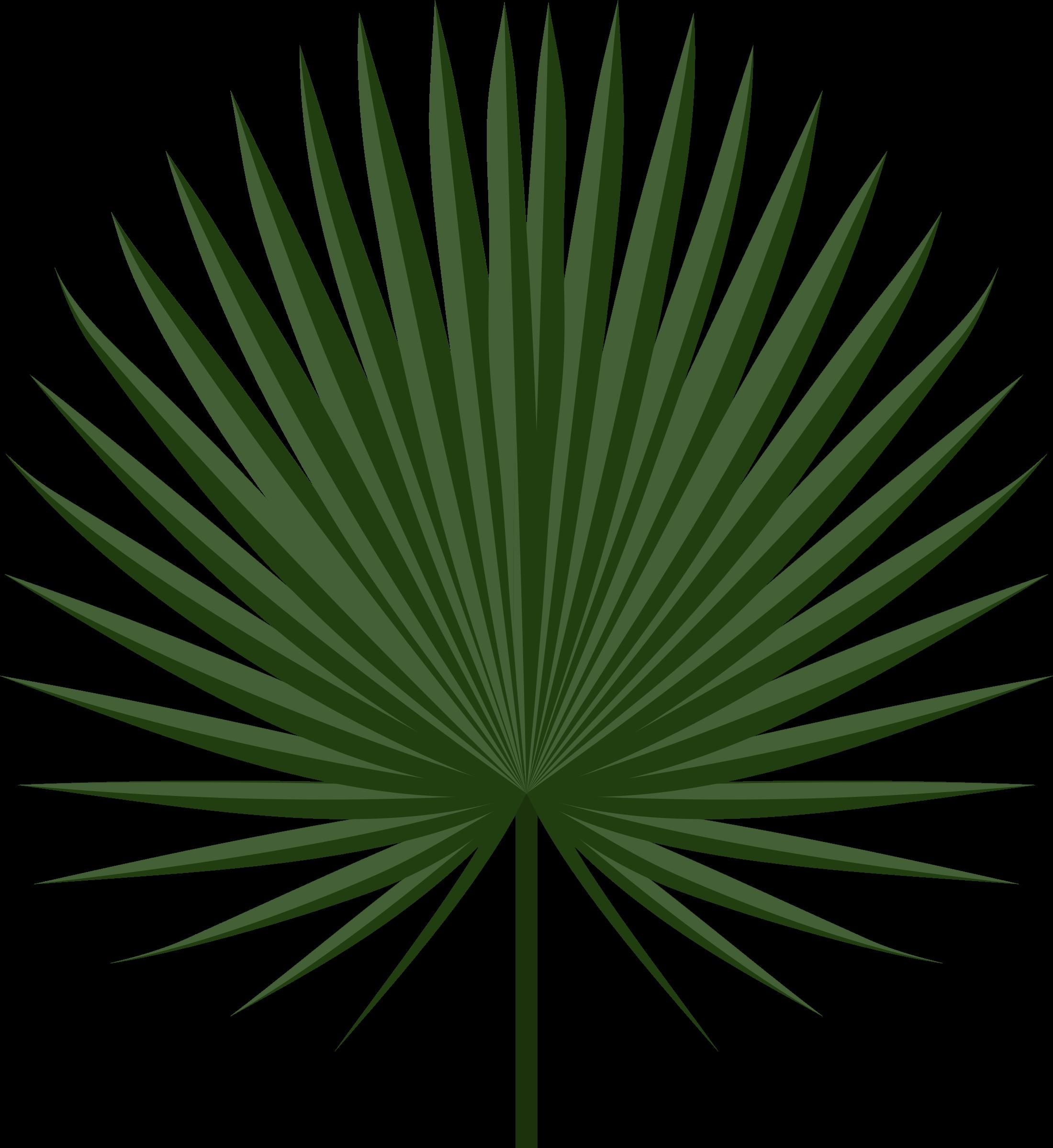 Clipart leaves palm leaves. Sabal leaf big image