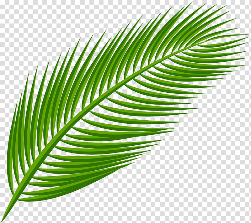 Clipart leaves palm leaves. Green branch arecaceae leaf