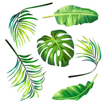 Clipart leaves palm leaves. Png images vector and