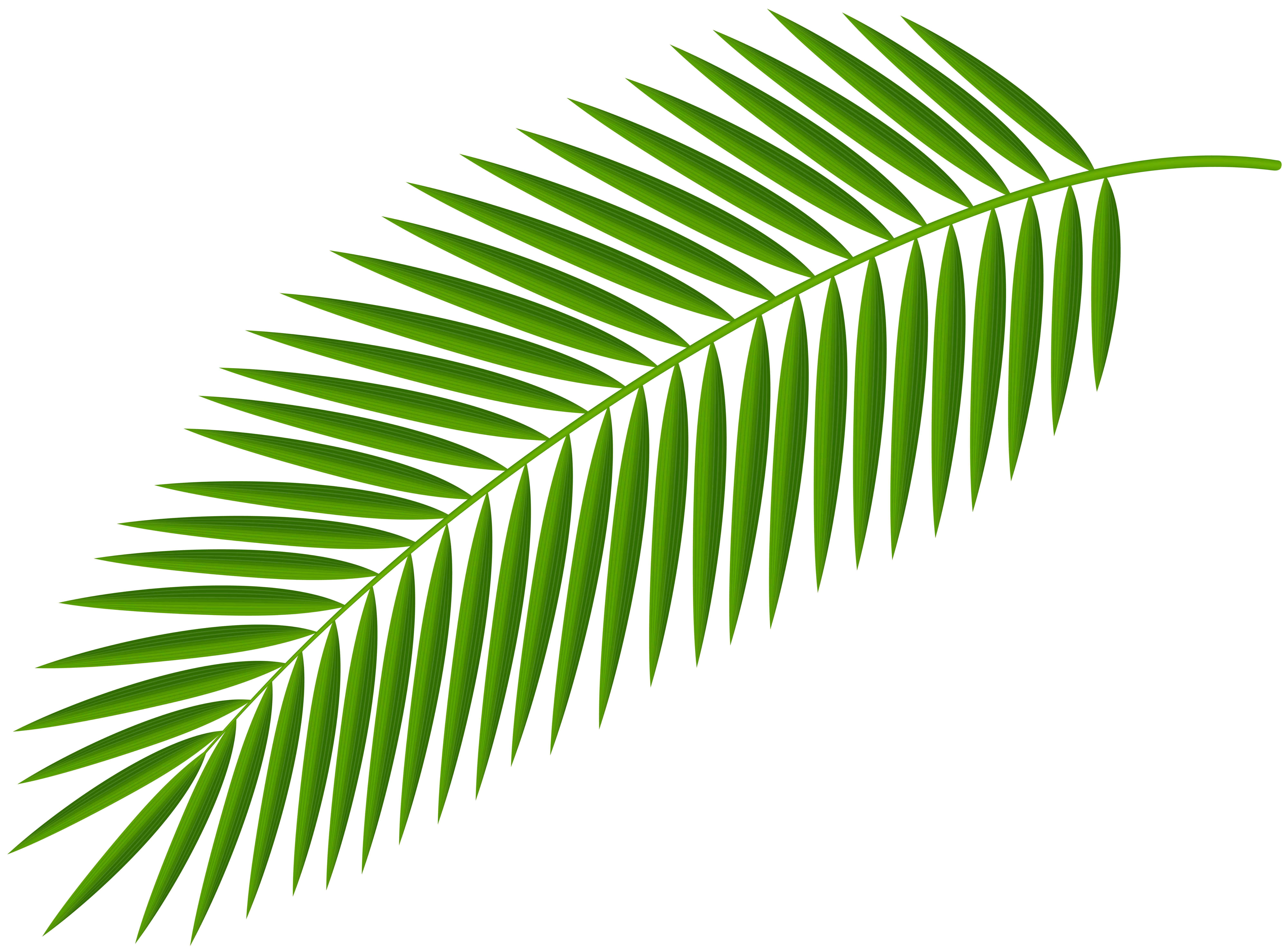 Branch clip art trees. Clipart leaves palm leaves