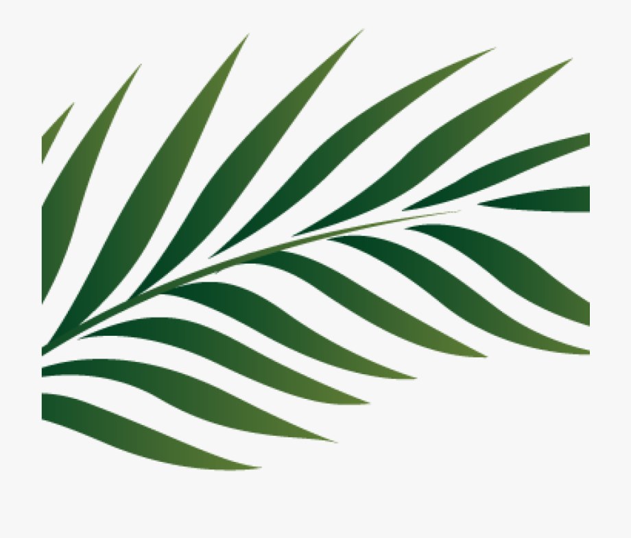 Clipart leaves palm leaves. Branch image free cliparts