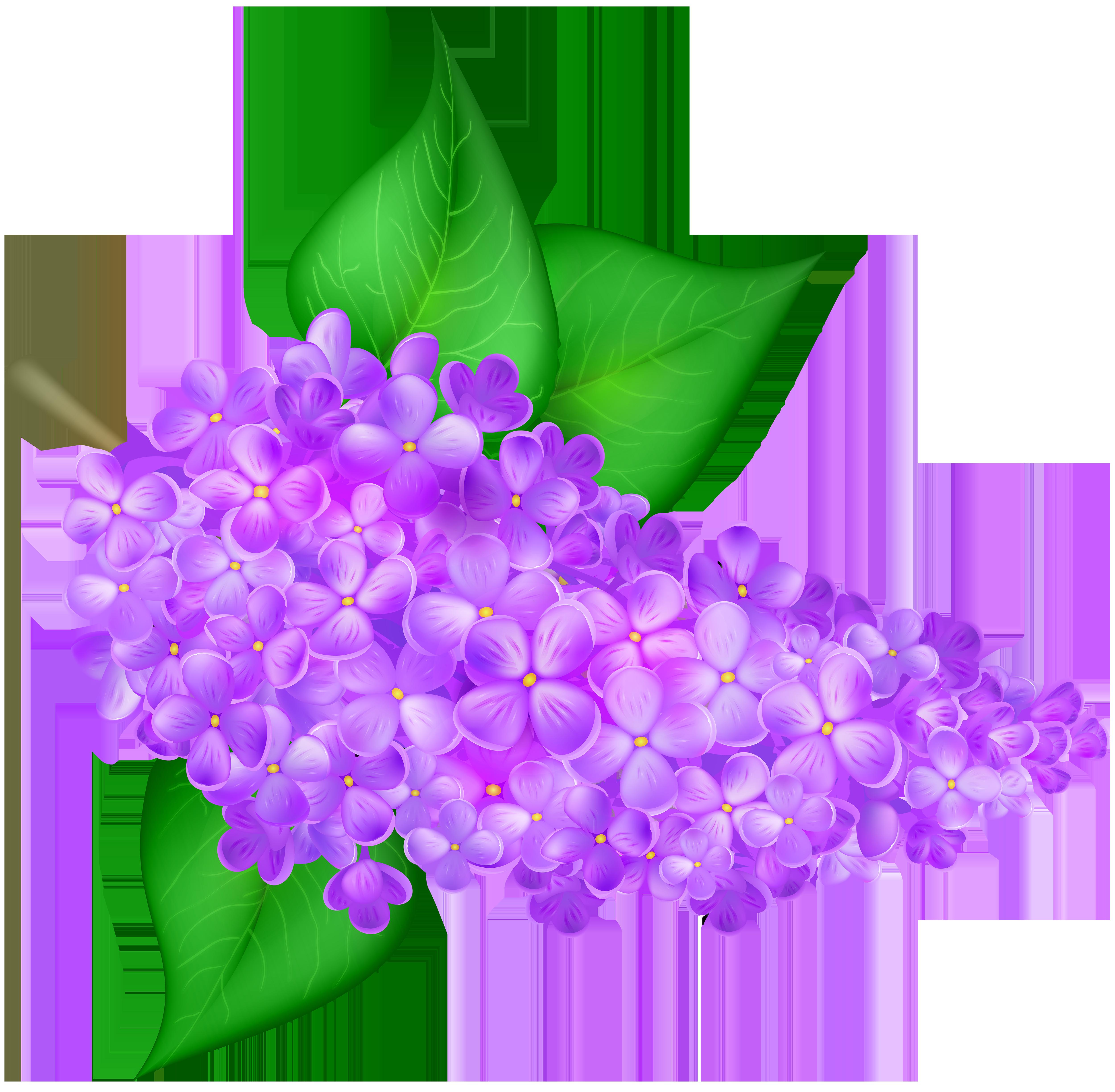 Lilac flower png clip. Lavender clipart transparent background