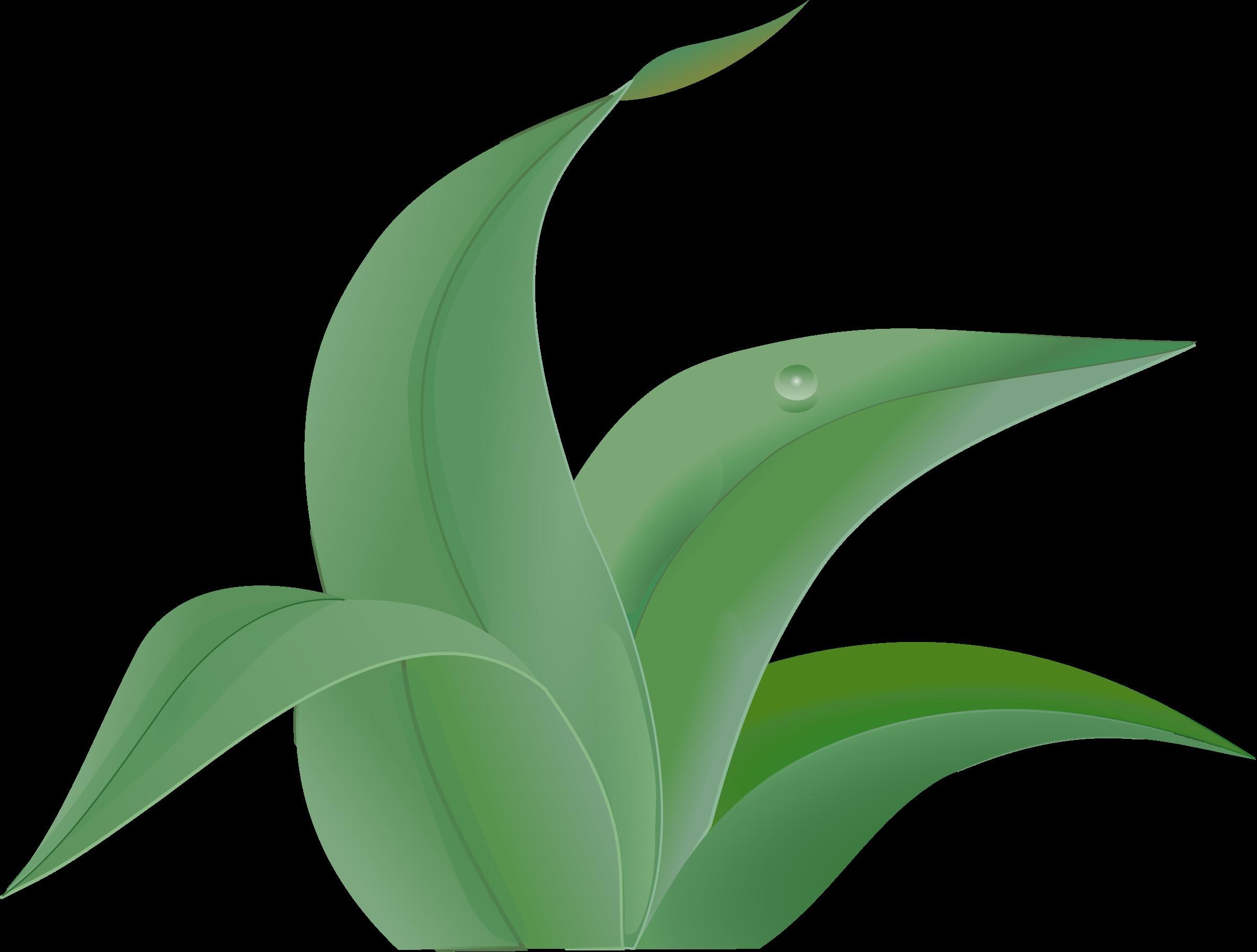 Jungle clipart flora. Leaf free content clip