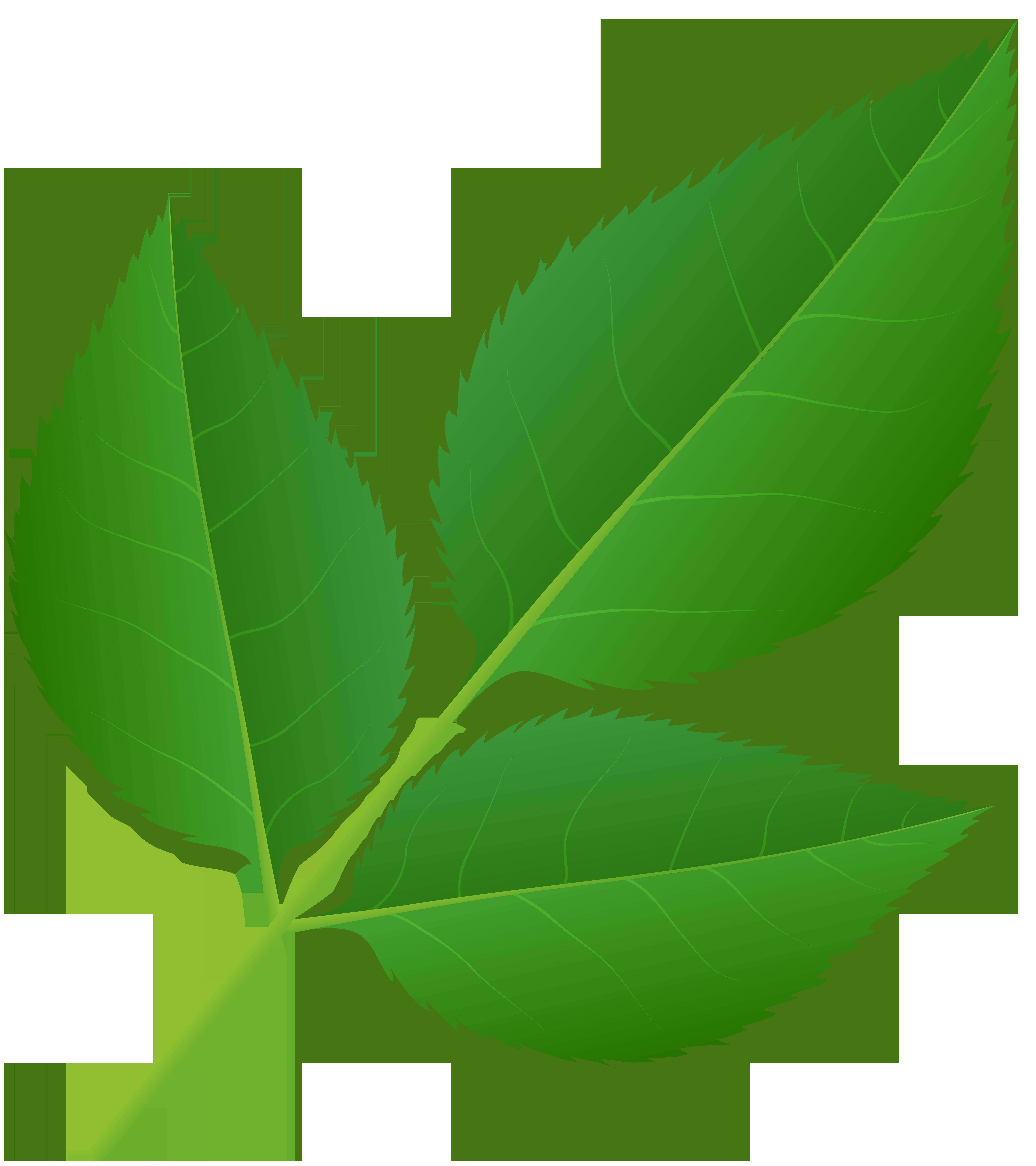 Leaves of rose stem. Clipart roses leaf