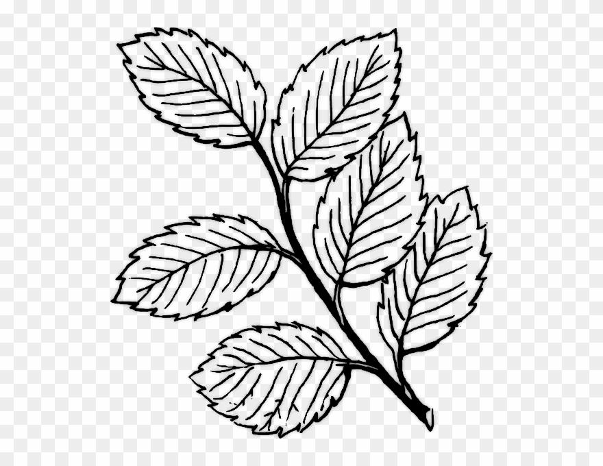 Rose clipart leaf. Miranda lambert buzz drawings