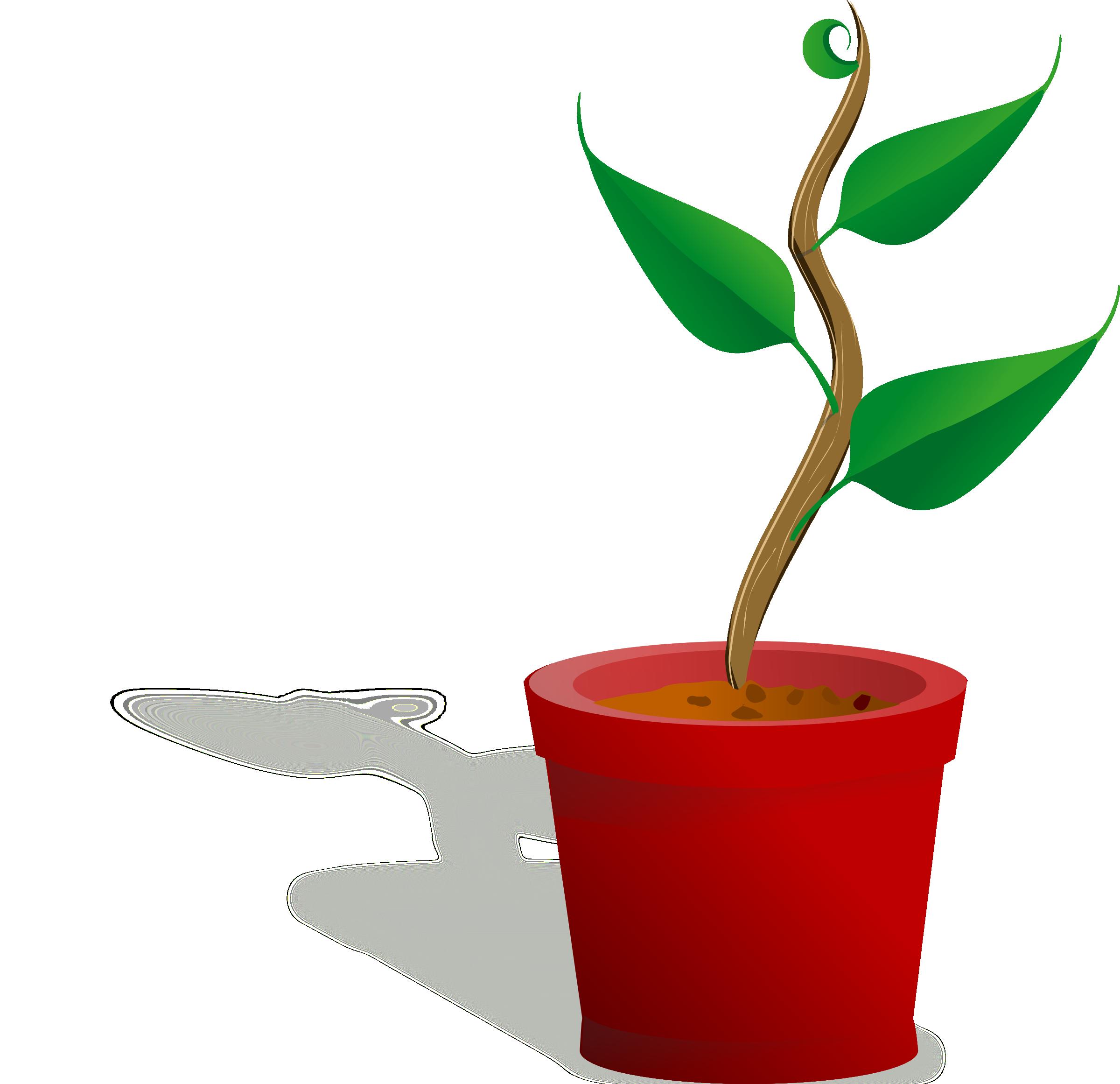 Growing stages panda free. Gardening clipart plant seedling