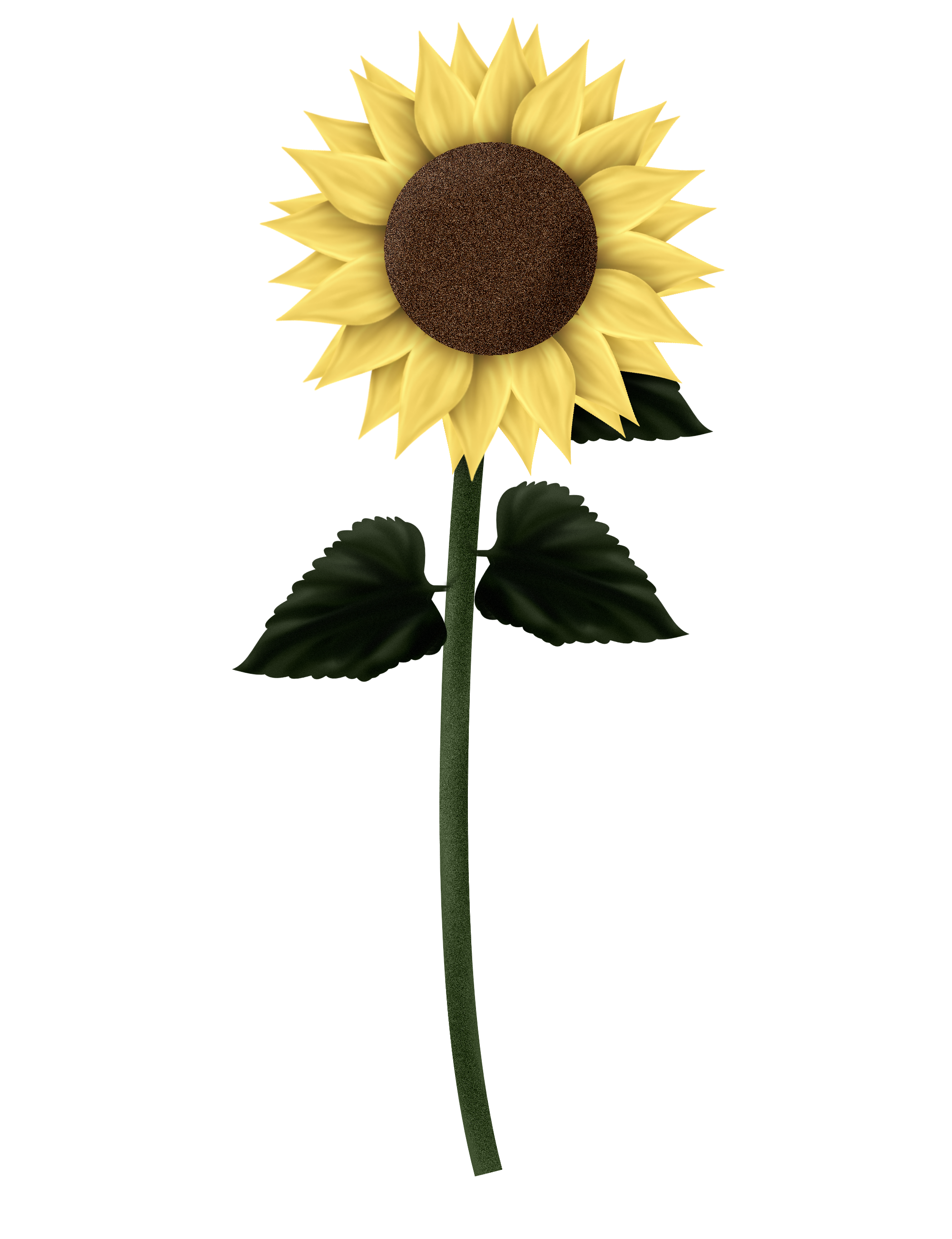 Leaves clipart sunflower. Sunflowers png transparent images