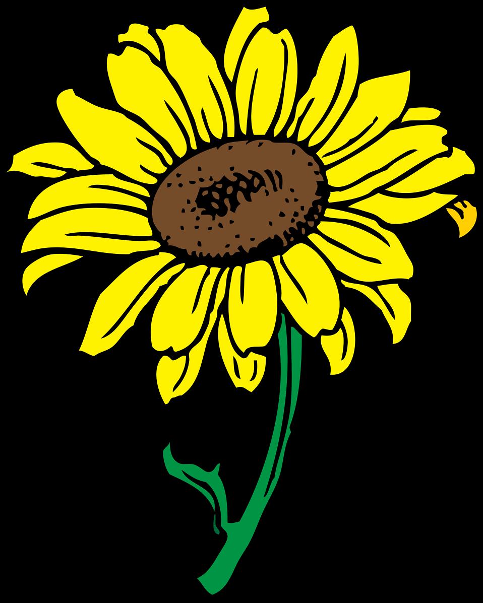 Free stock photo illustration. Leaves clipart sunflower