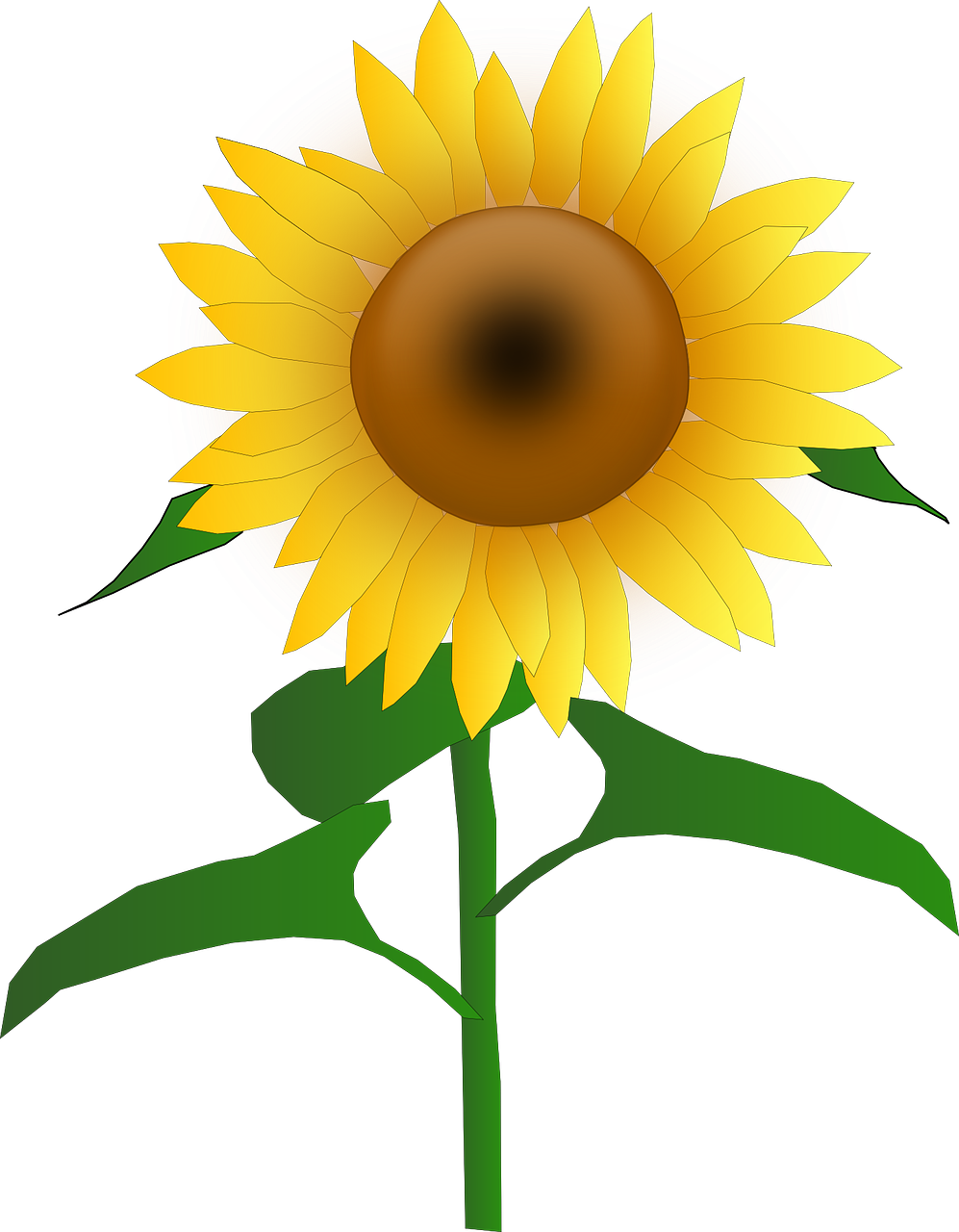 Blooms blossom golden yellow. Sunflower vector png
