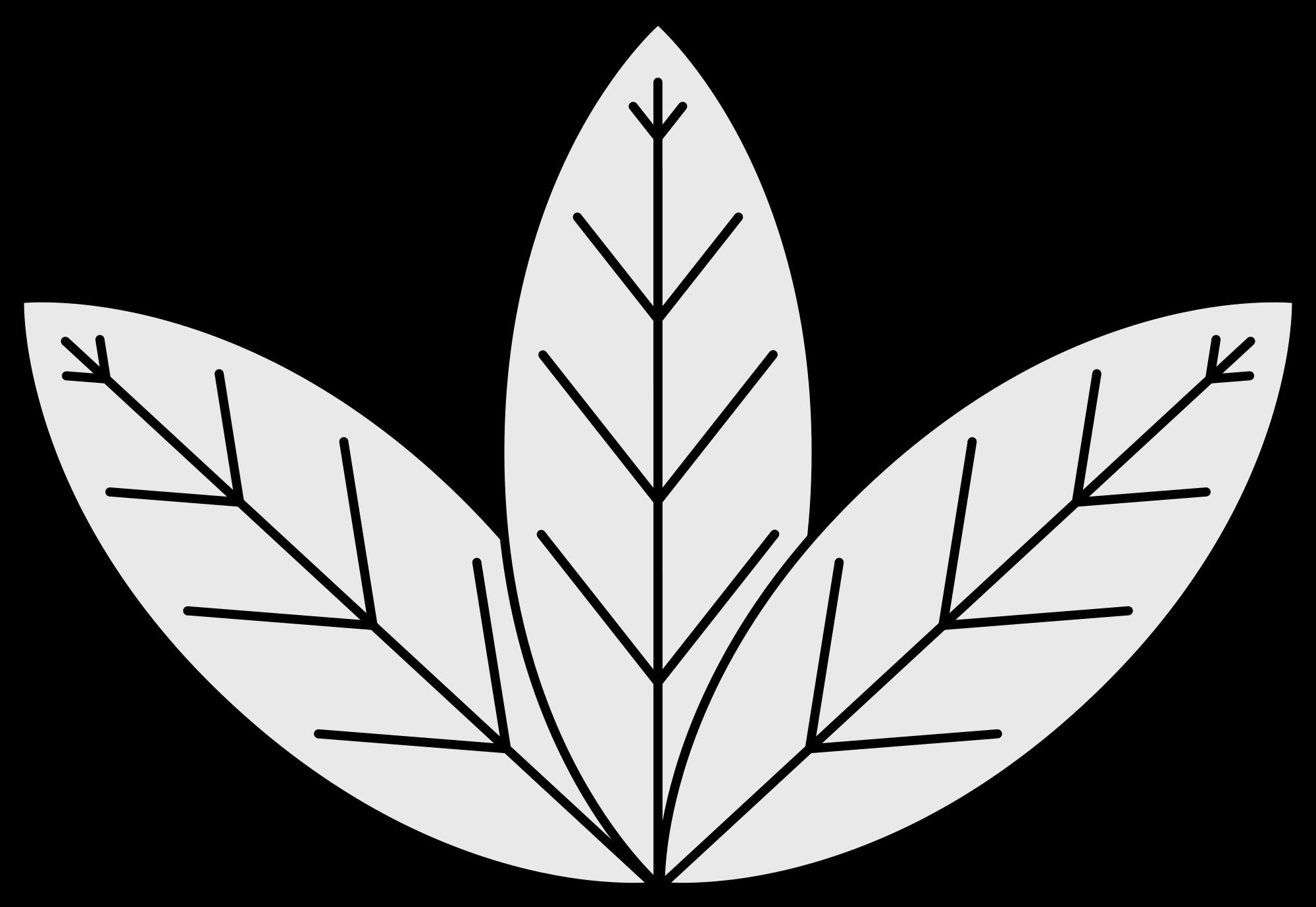 Leaves tobacco leaf