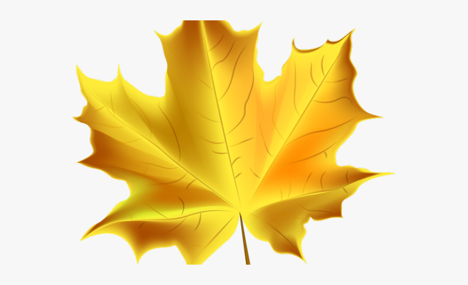 Autumn leaves fall . Leaf clipart transparent background