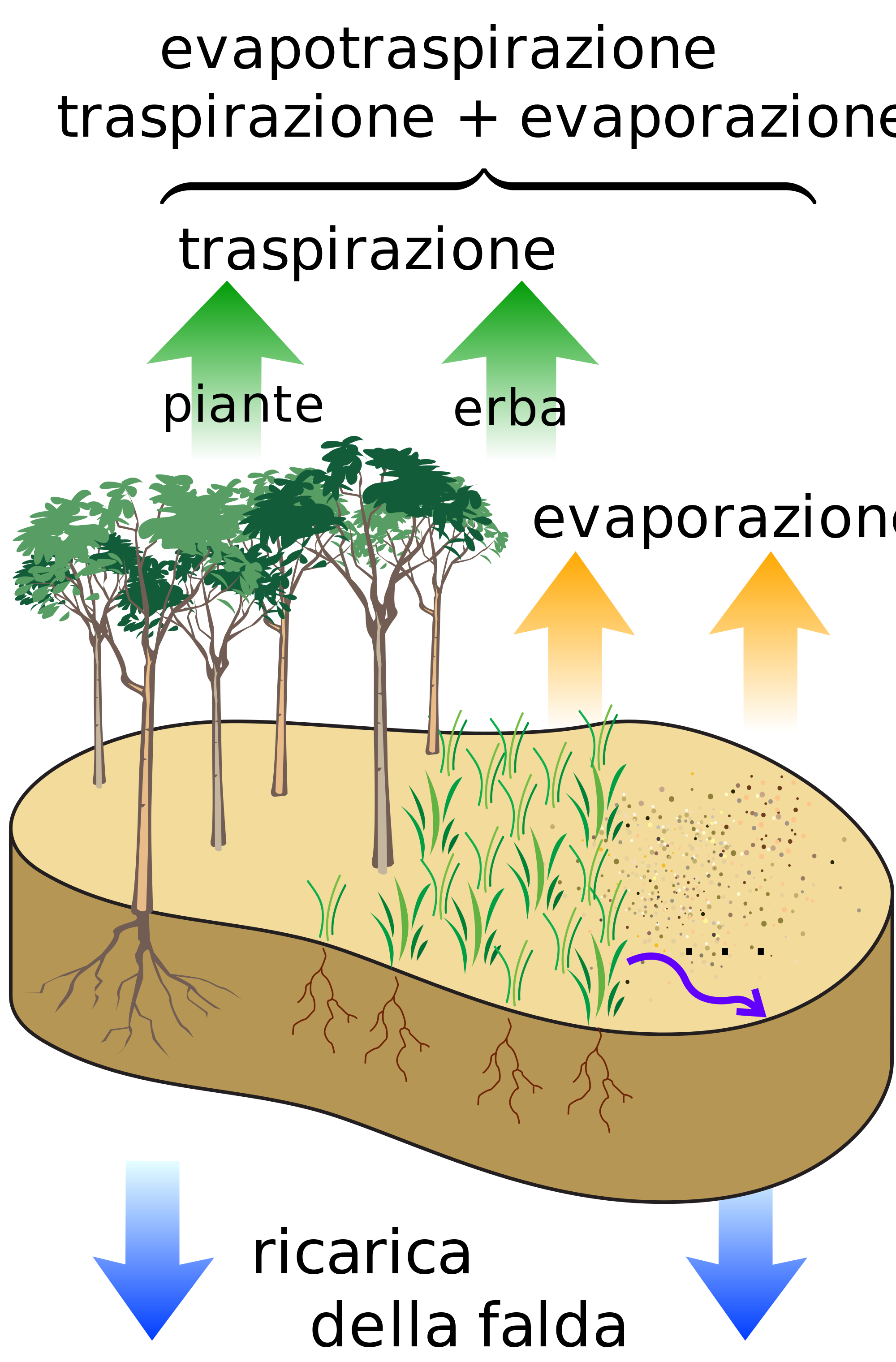 Vegetation and slope stability. Geology clipart water erosion