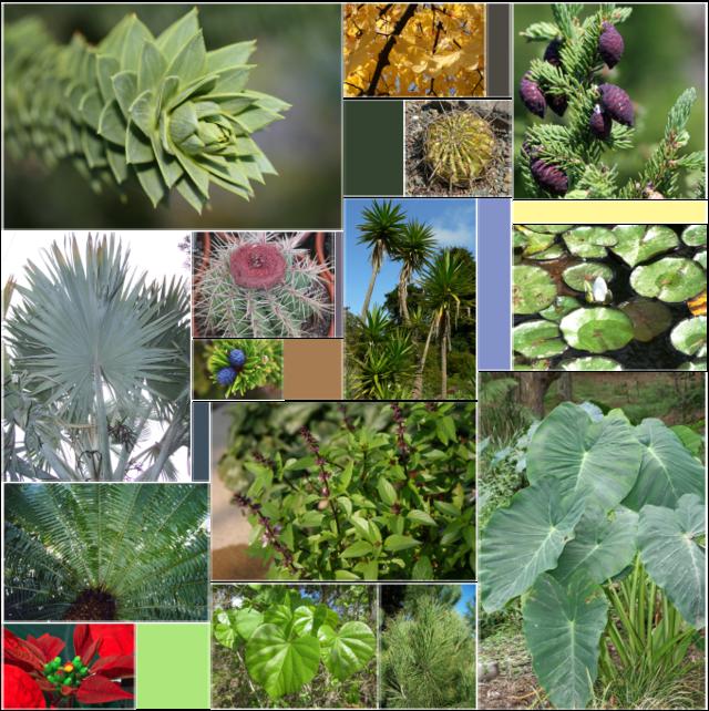 seedling clipart vascular plant