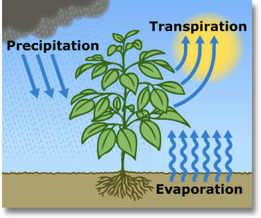 Evaporation clipart soil. Evapotranspiration is the sum