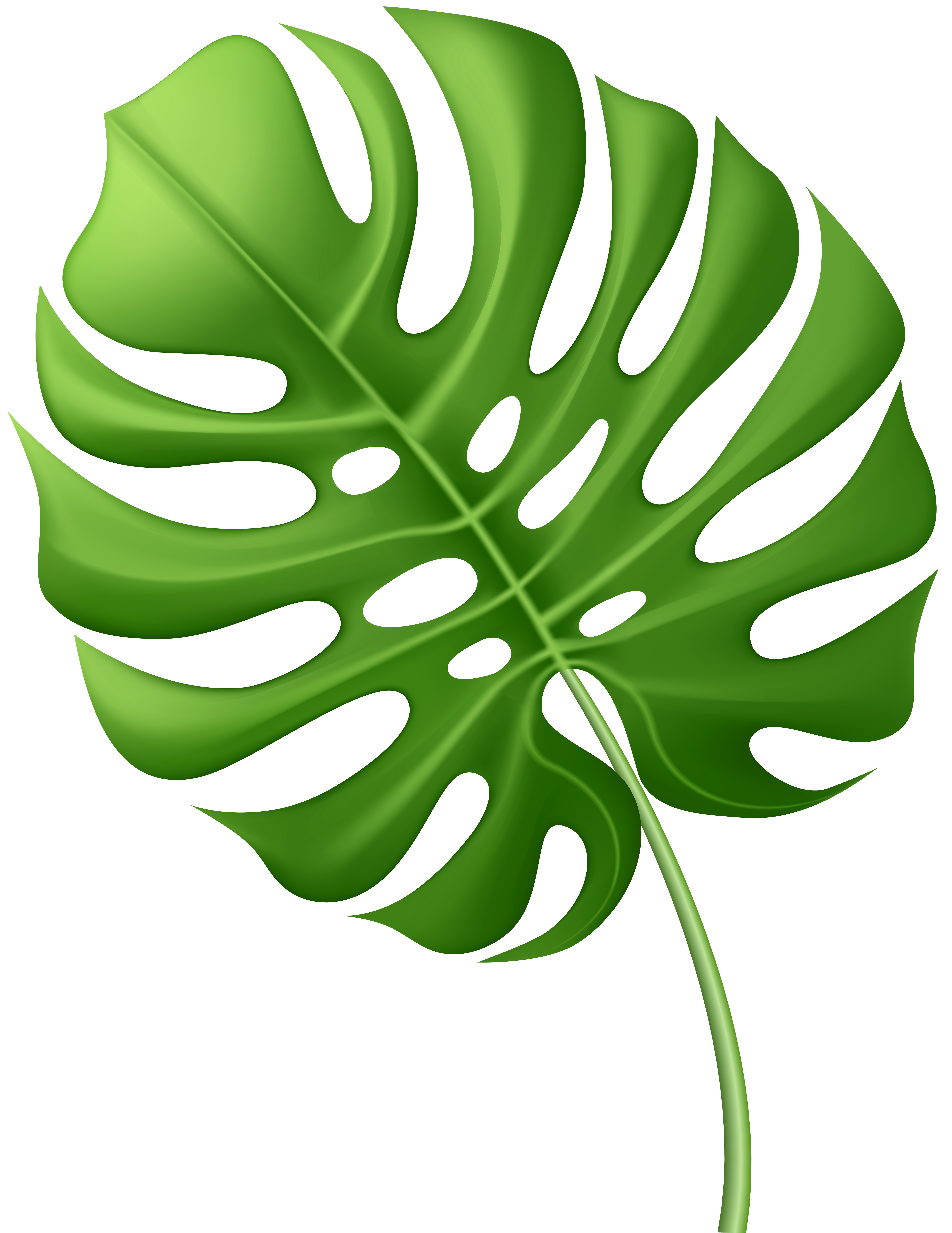 Clipart Leaves Tropical Clipart Leaves Tropical Transparent Free For Download On Webstockreview 2021 The best gifs are on giphy. webstockreview