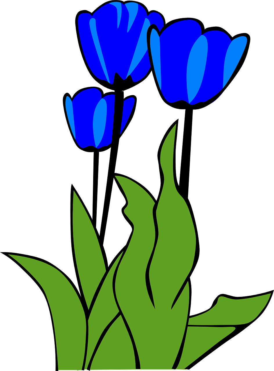 Clipart leaves tulip. Tulips flowers plant transparent