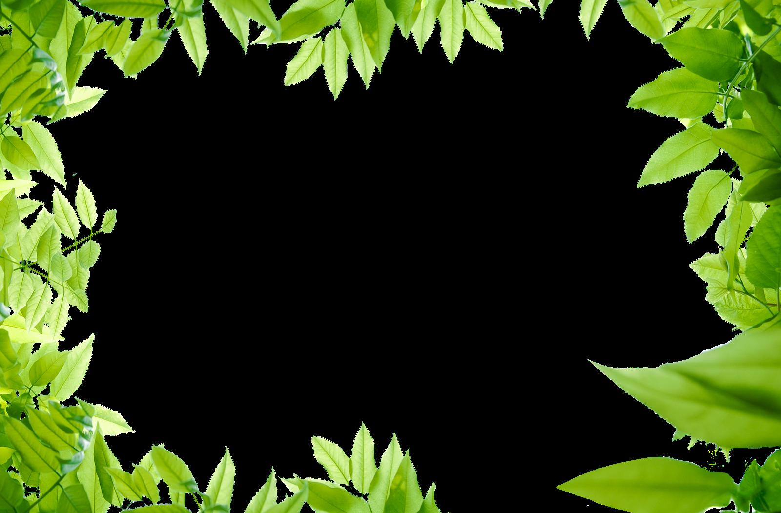Leaves images transparent free. Leaf border png