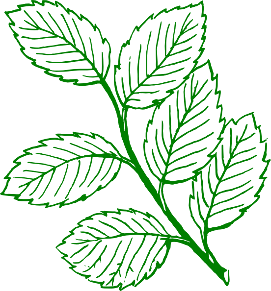 Leaf vector png. Green outlined mint leaves