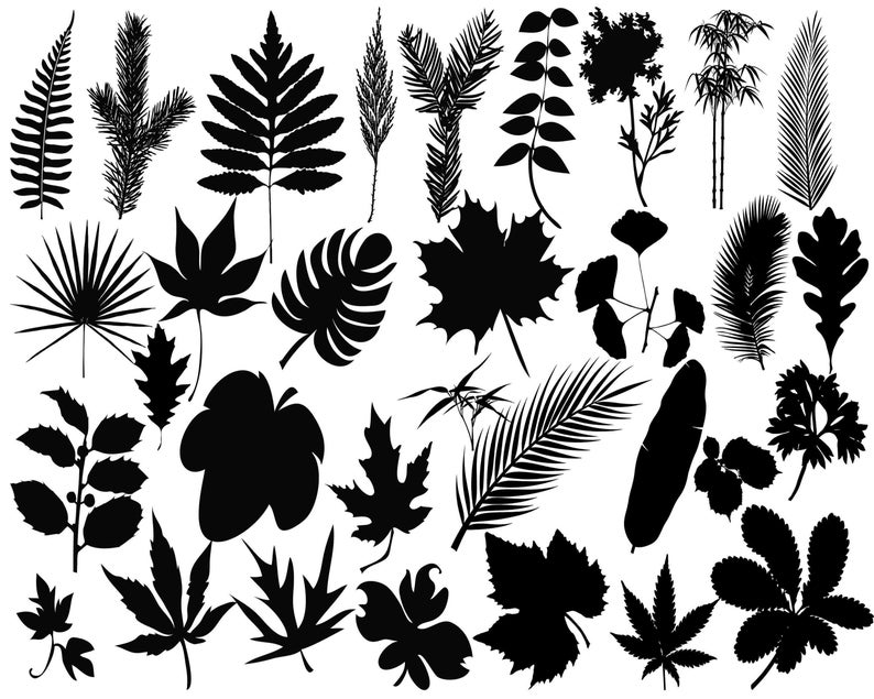 Leaves clipart vector. Silhouette leaf svg cut