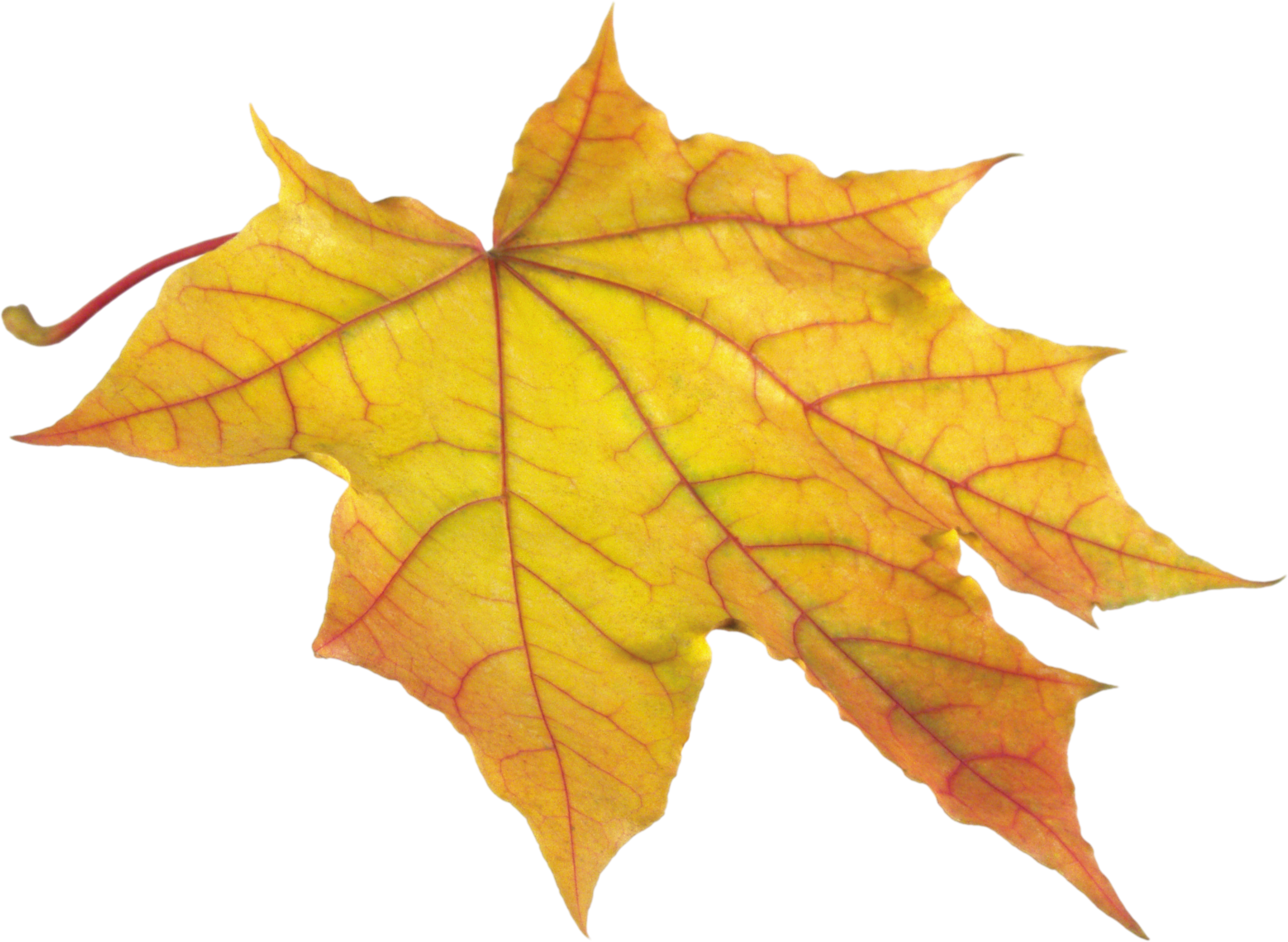 Yellow leaf png image. Clipart park autumn sky