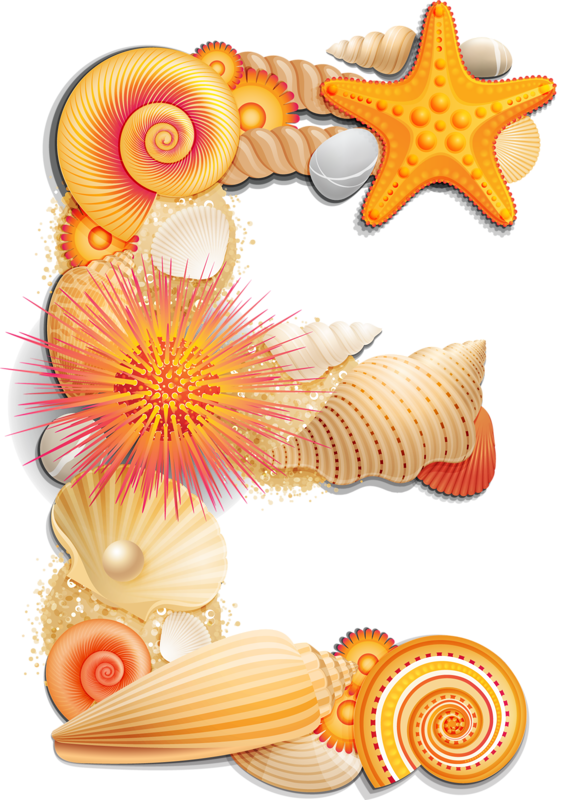 alpha orange png. Shell clipart form