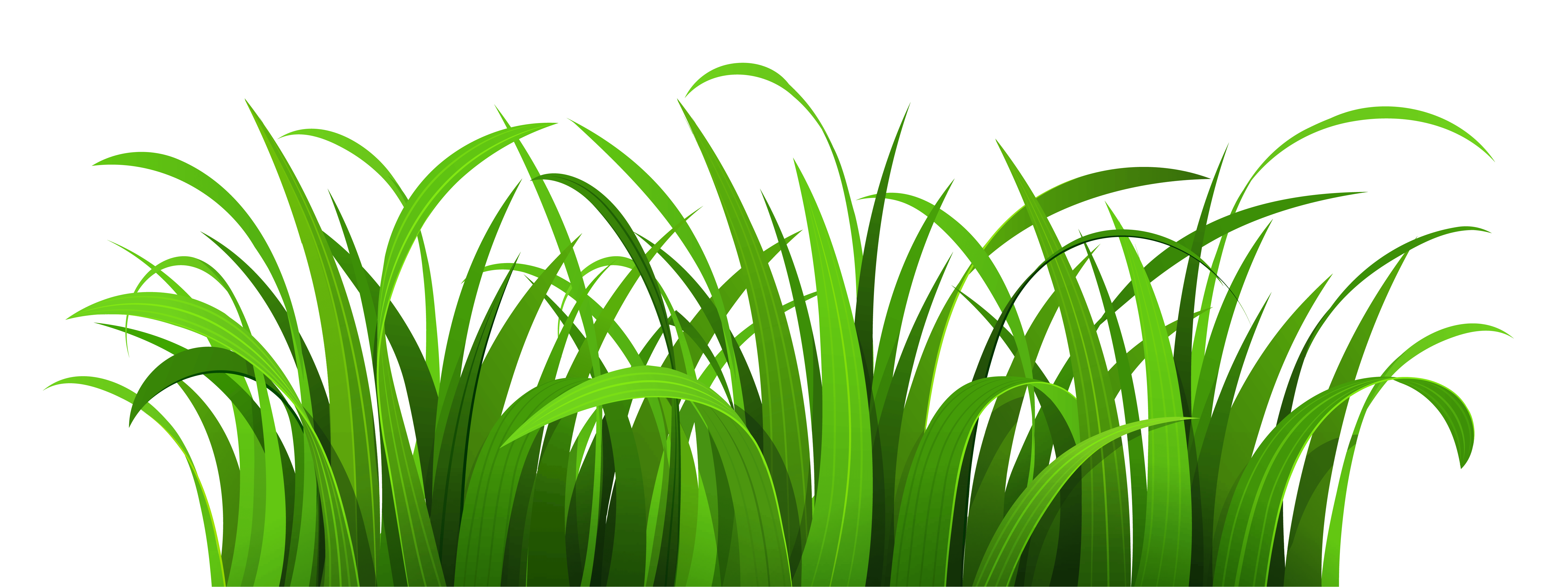 Free swamp background cliparts. Clipart grass tropical grass