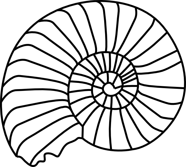 shell clipart starfish