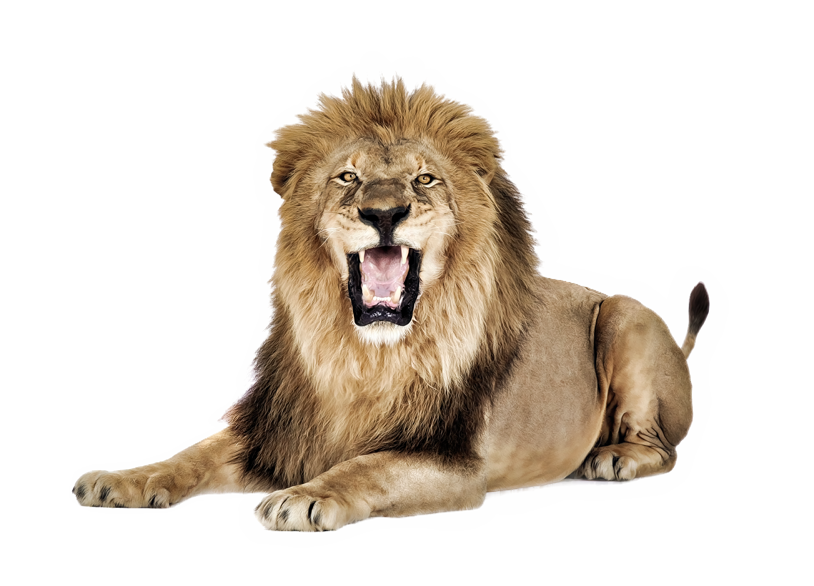 different types of. Clipart swimming lion