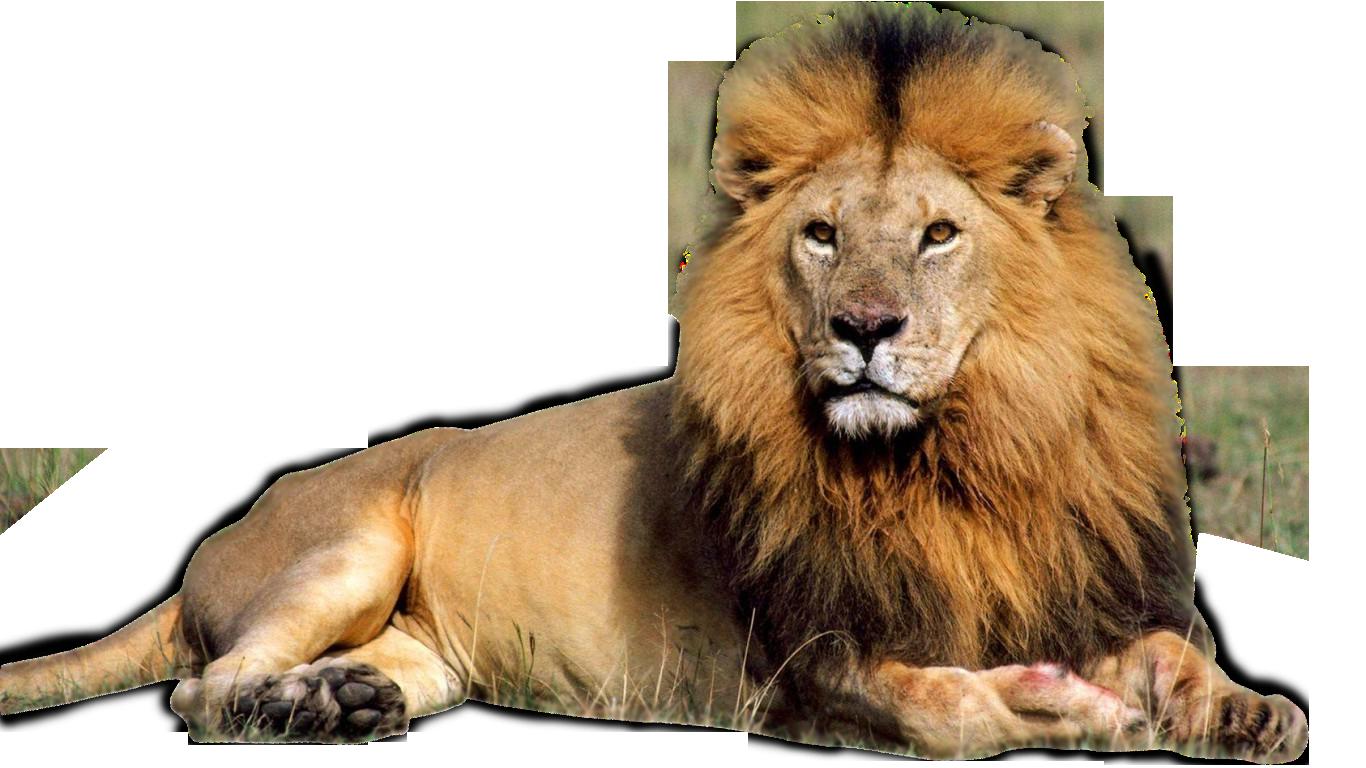 Image hd adsleaf com. Clipart png lion