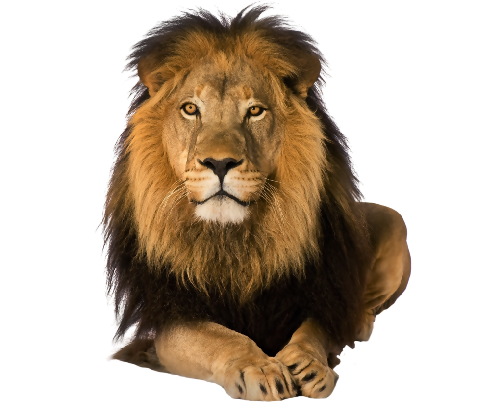 Pre cut by moonglowlilly. Clipart lion asiatic lion