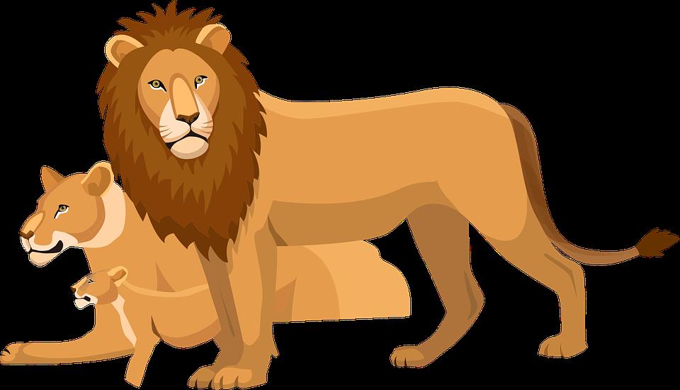 lions clipart asiatic lion
