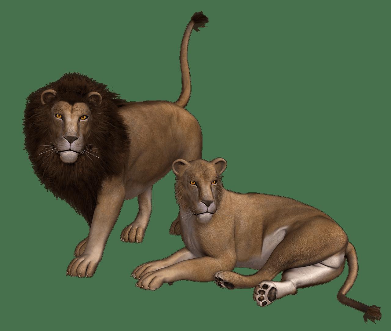 Clipart lion couple. Png photos