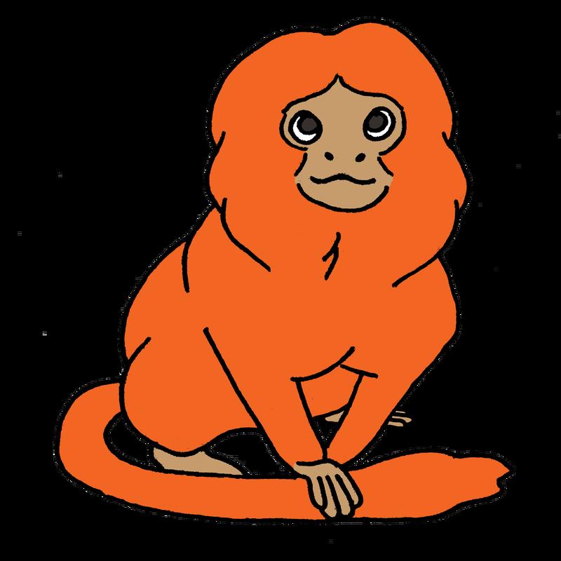 Golden tamarins unless picture. Clipart monkey lion