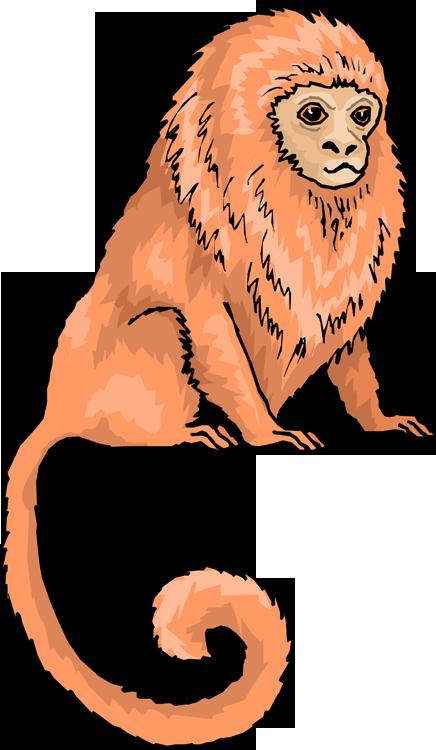 Free tamarin. Clipart monkey lion