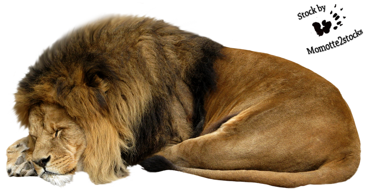 Trail clipart lion. Cut out stock png
