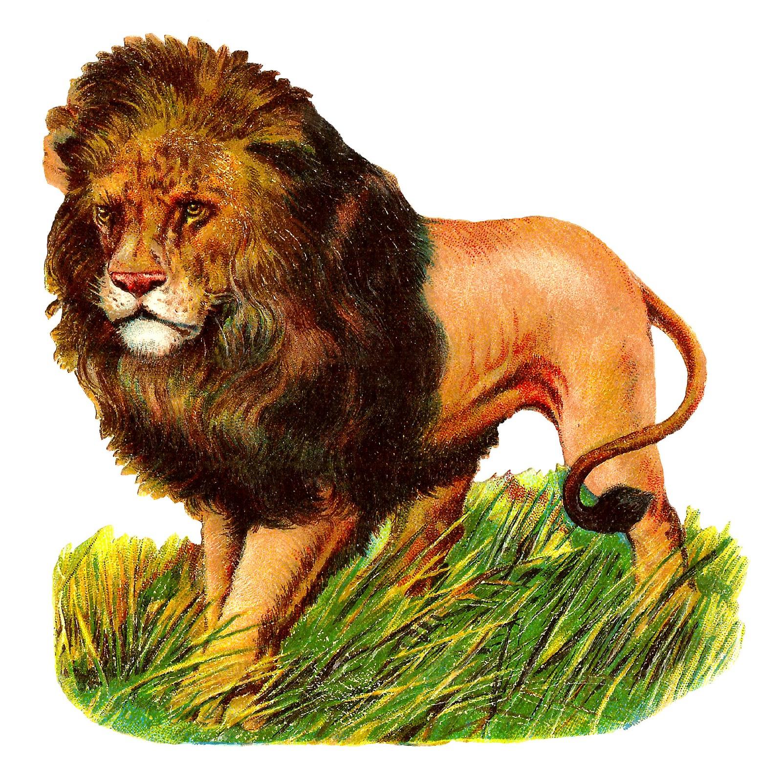 Clipart lion wild animal. Antique images stock image