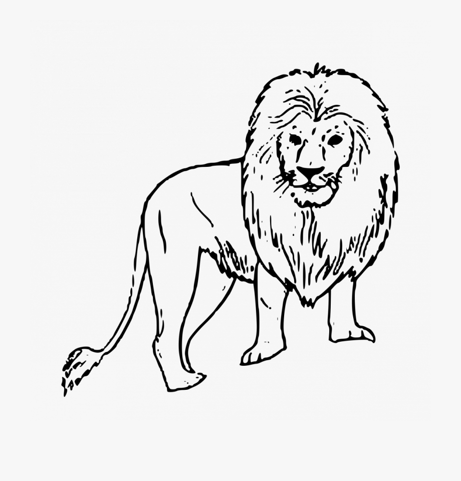 Large size of how. Clipart lion wild animal
