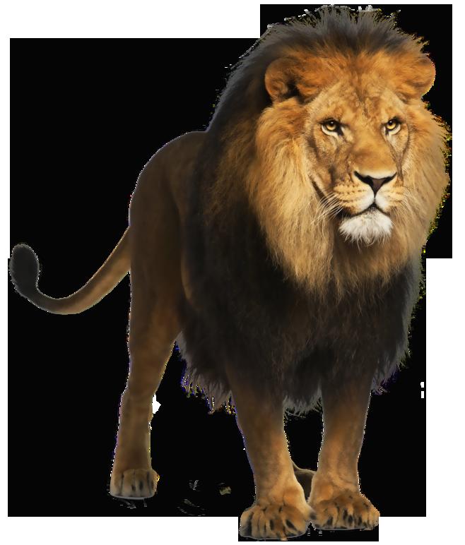 Trail clipart lion. Png picture dzivnieki pinterest